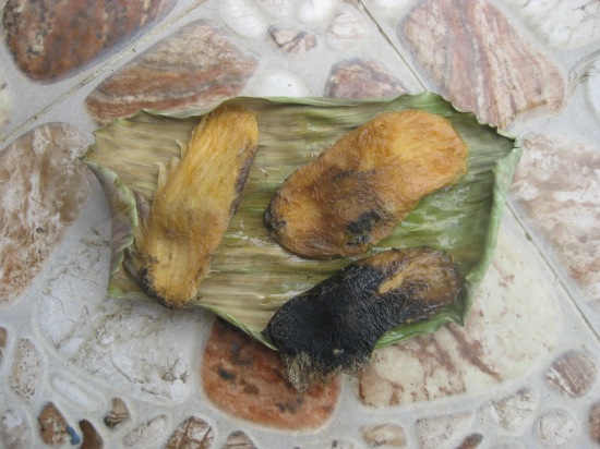 Rotten mango seeds